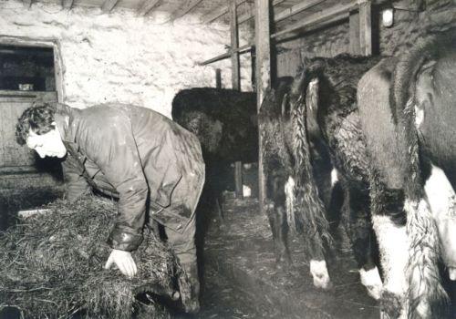 young-farmer-feeding-cows