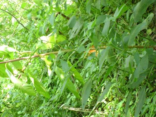 18 weeds